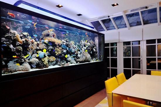 Best Tips For Selecting The Right And Healthy Fish Tank Decorations: Fish Tank Decoration Ideas