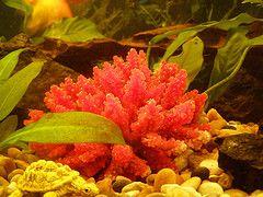 Коралловая вода – дар природы