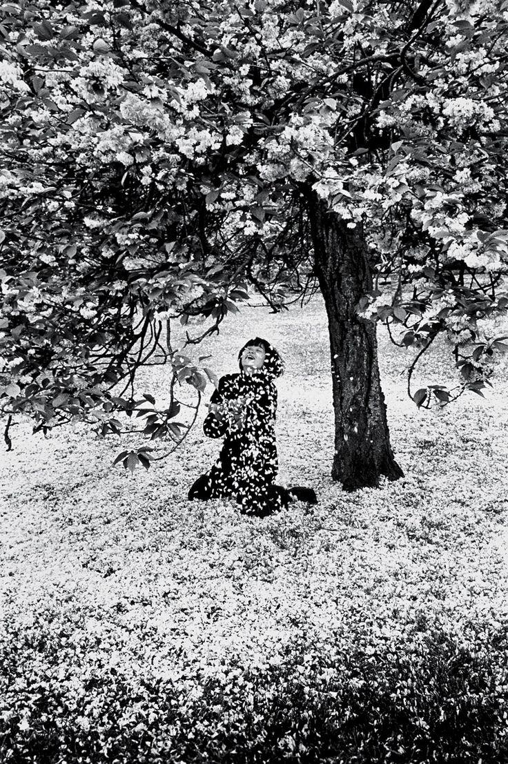 Parc de Sceaux, Cerisiers Japonais photo by Édouard Boubat, 1983