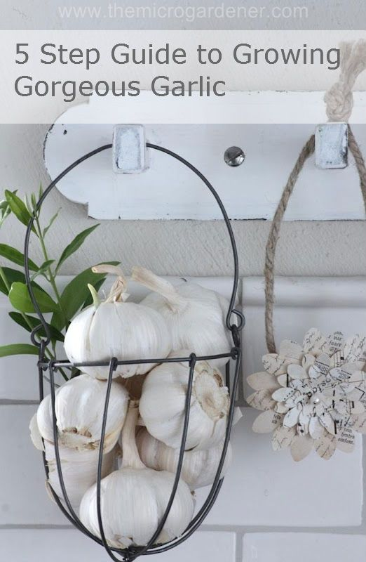 5 Steps to Growing Gorgeous Garlic: Growing Gorgeous, Kitchens, Ideas, Growing Garlic, Step Guide, Guide To, Wire Baskets, Gorgeous Garlic, Hanging Baskets
