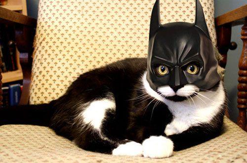 131 pic on Design You Trust: Batcat, Cats, Animals, Bats, Pet, Funny Stuff, Batman