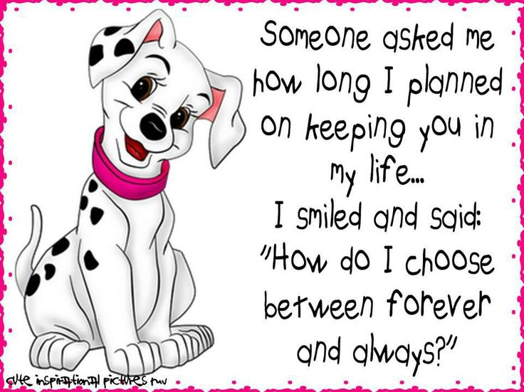 Dalmatian Quotes Pinterest We, Dalmatians and Sweet