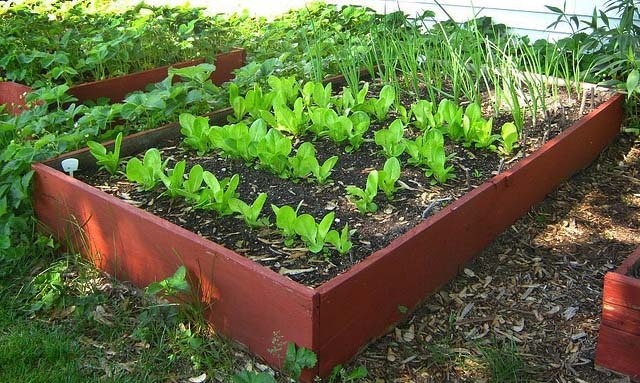benefit of gardening essay