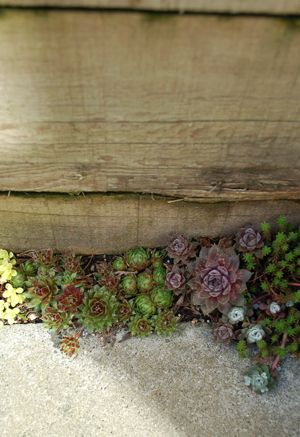 another awesome use of succulents, they grow well in the smallest places.