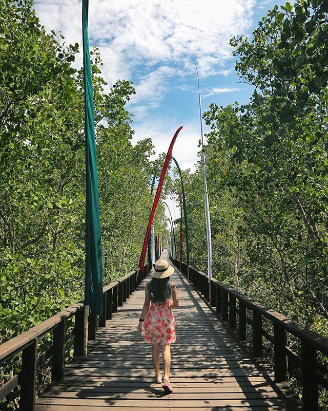 walk through the Mangrove to enjoy nature ..