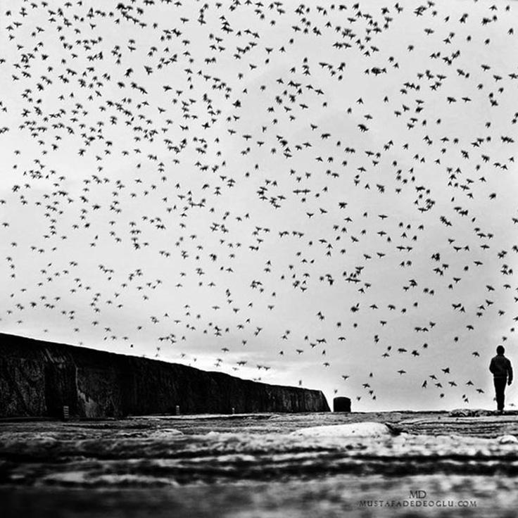 Fotografie: Mustafa Dedeoglu