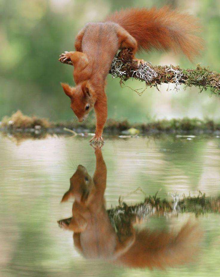 21 photographies hilarantes d'animaux de la forêt dans des postures très drôl…