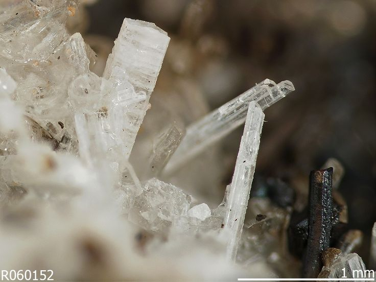 Celsian, BaAl2Si2O8, Benallt mine, Lleyn, Wales, GB, UK. Source: Marcus Origlieri. Colorless to white elongated prismatic crystals