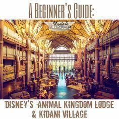 Great beginner guide to Disney's Animal Kingdom Lodge