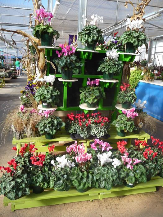 225 best images about business on pinterest gardens for Garden display ideas