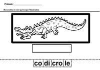 Je trace et je découpe les syllabes du mot crocodile