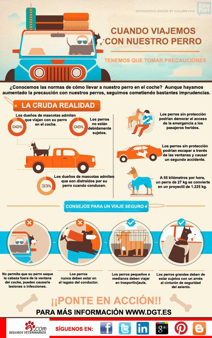Ahora que nos vamos de vacaciones, ¿Sabes viajar seguro con tu #perro?