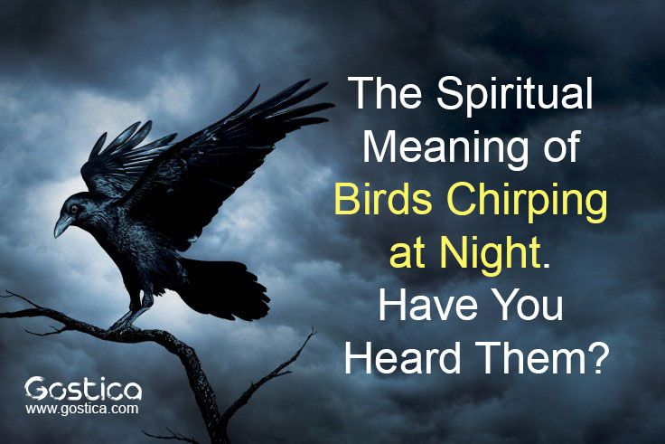 The Spiritual Meanings Of Birds | Conscious Lifestyle