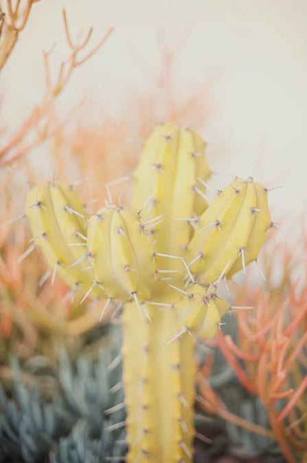 cacti cutie                                                                                                                                                      More