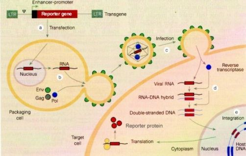 Global Viral Vectors and Plasmid DNA Manufacturing Market Research Report 2017 Cost Structure Analysis, Overview, Manufacturing, Application, Regions, Forecast to 2022