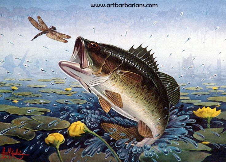 17 best images about fish prints on pinterest limited for Bass fishing art