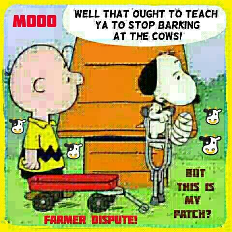 Snoopy has a Farmer Dispute over Cows coming Thru the Bushes