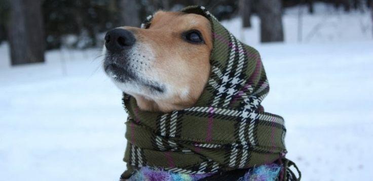 #Chic4Dog news! Come proteggi i tuoi piccoli amici dal freddo? L' #inverno arriva! http://blog.chic4dog.com/2014/10/come-proteggere-i-tuoi-piccoli-pelosi-dal-freddo/