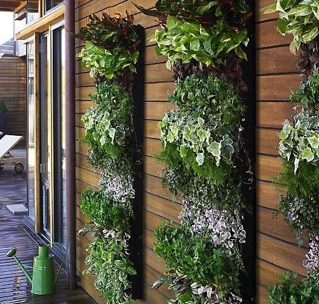Large planters with rows of leafy and flowering plants cover the side of a building.  See more vertical gardening ideas - http://thegardeningcook.com/vertical-gardens/