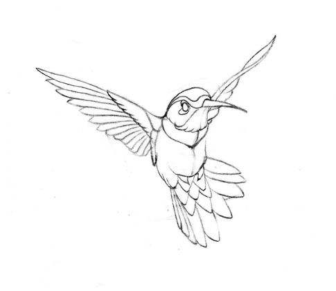 Hummingbird Drawing on flower coloring pages for free