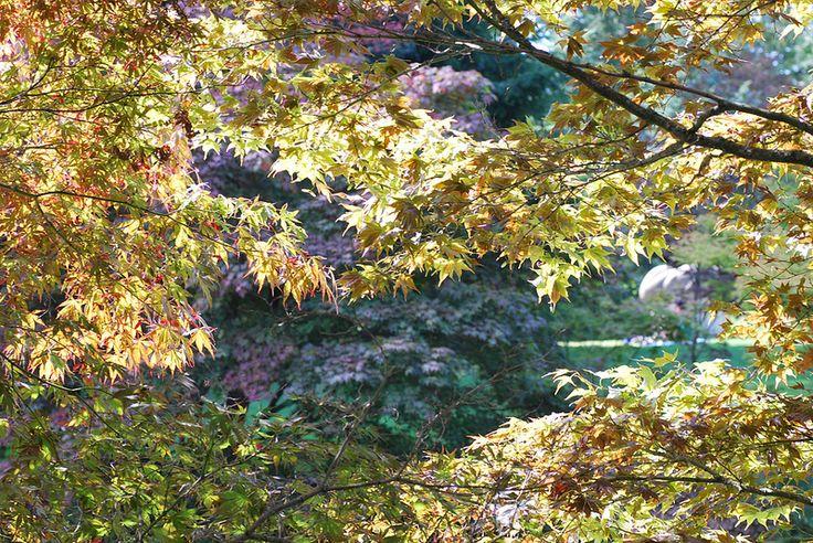 Autumn Sunshine | by littlekiss☆