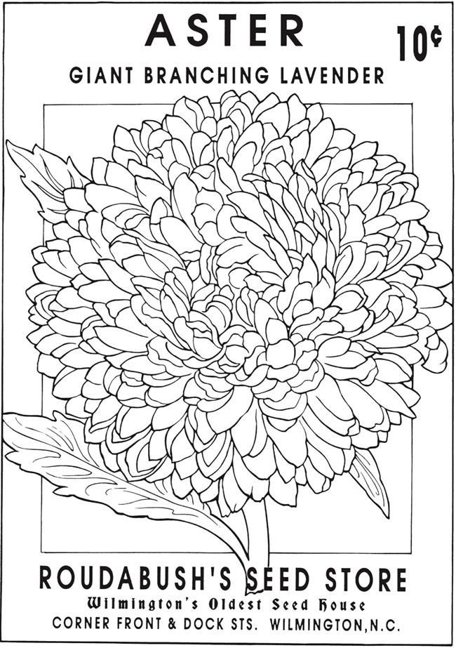 Creative Haven Vintage Flower Seed Packets Coloring Book 6
