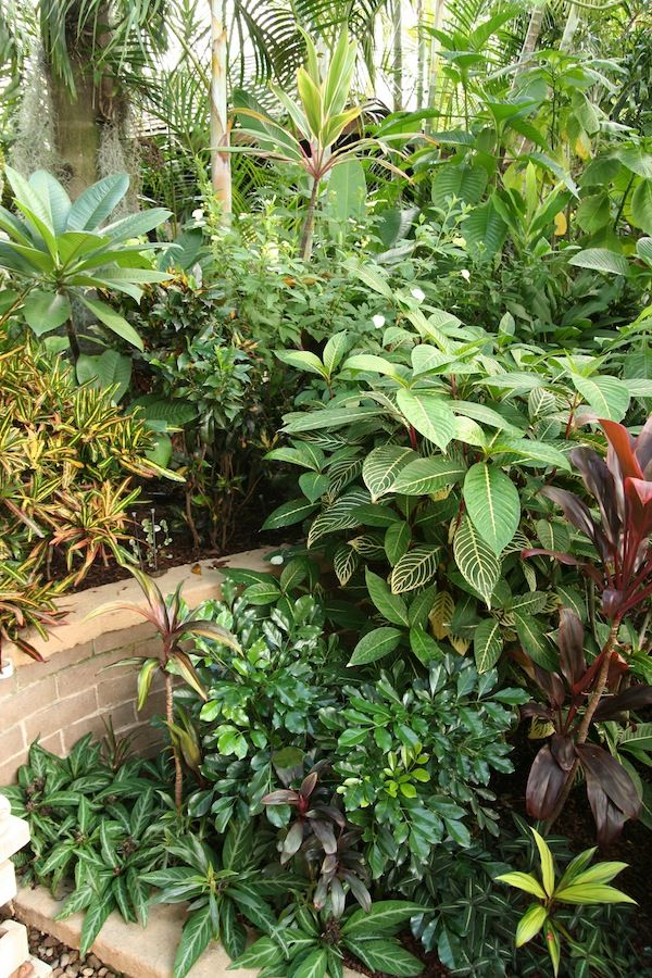 temperate climate tropical garden gardendrum tropical breeze design helen curran make plant pictures with bold