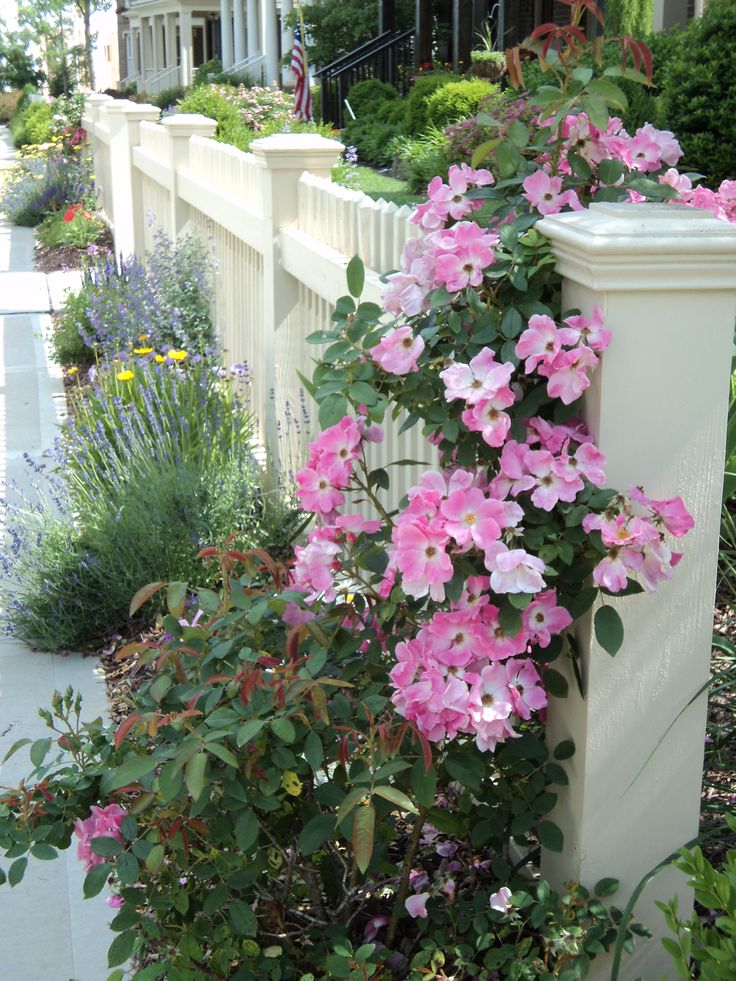 Picket Fence W Pretty Roses Flowers And Gardening
