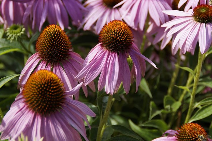 9 tipp a tavaszi fáradtság ellen... * Mit tehetünk ellene? * Milyen illóolajakat használhatunk ellene? * Melyek azok a gyógynövények, amelyekkel csökkenthető a tavaszi fáradtság érzete? Ha a válaszokat szeretnéd tudni, akkor olvasd el blogbejegyzésünket: http://www.fitotitok.hu/egyeb/9-tipp-a-tavaszi-faradtsag-ellen  Ha kérdésed van, írjál az info@fitotitok.hu e-mail címre.  Eszter