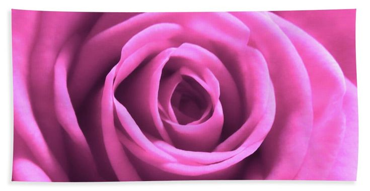 A pink rose macro enhanced with HDR. So soft. So beautiful. Great choice for wall art to brighten up the room with color. Great choice also as greeting card, pillow or #towel!