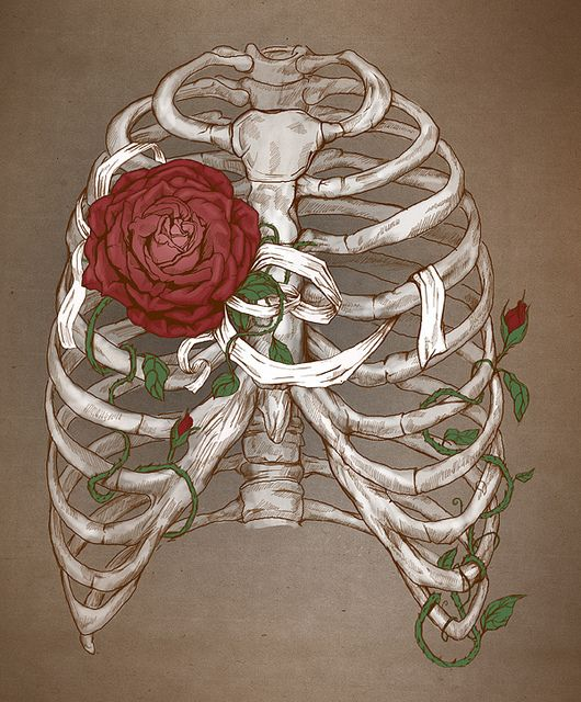 I have a random obsession with all things ribcage.