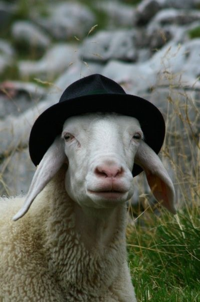 """a sheep...in a hat """"Having a baaaad hair day!"""" ;) Cute picture!! Thanks for sharing!"""