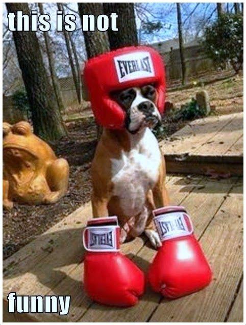Boxer Dog! Awww cute :)))