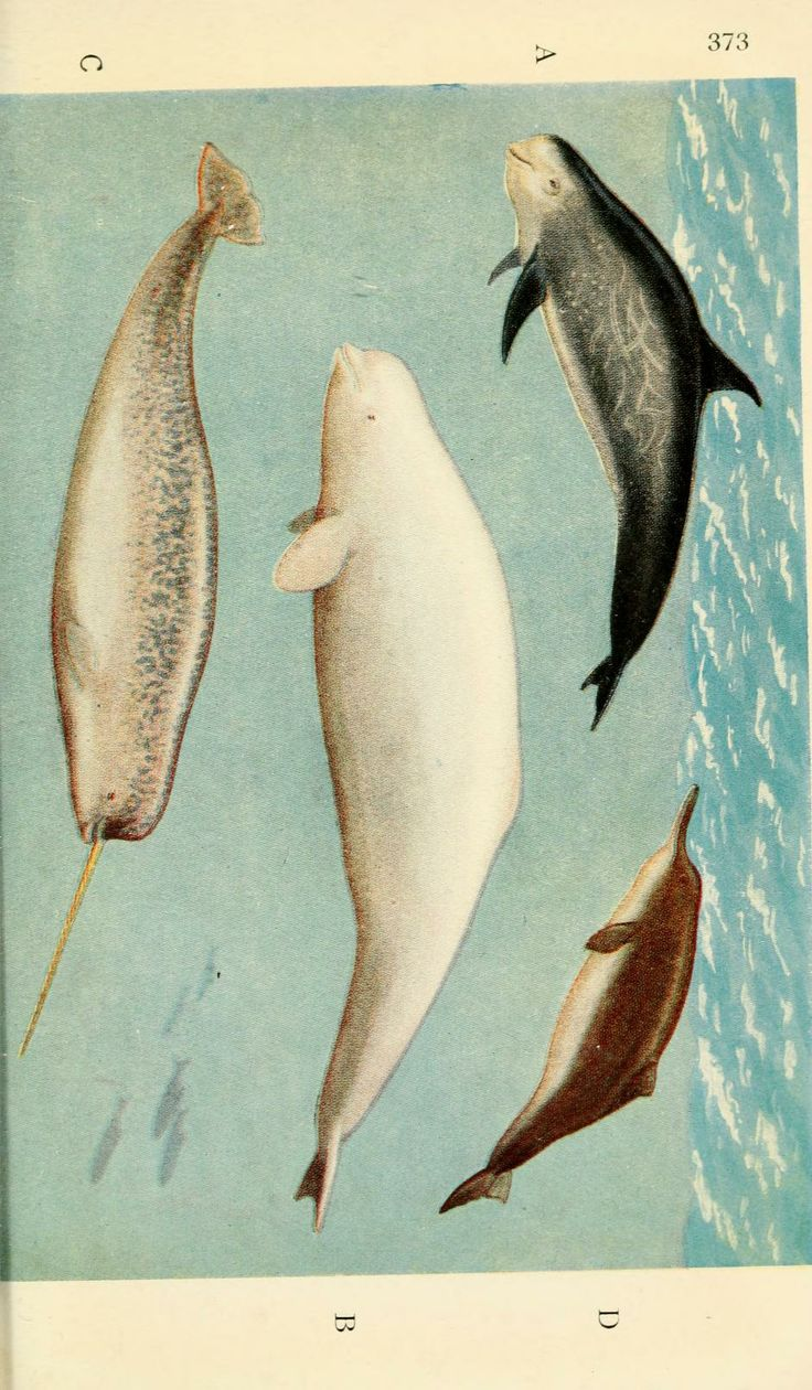 Field book of giant fishes, - Biodiversity Heritage Library 9 colored plates