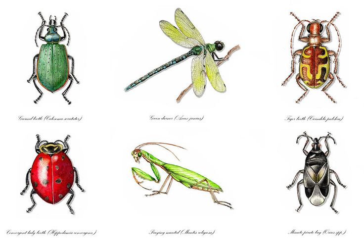 beneficial garden insects painting beneficial garden insects fine