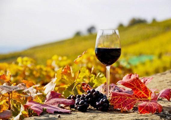 Cyprus - Black grapes & wine, Paxna village