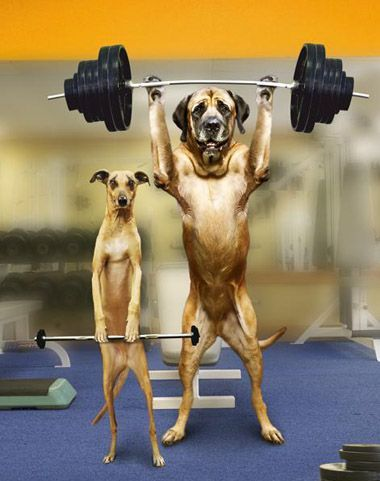 Ready for WWE for Dog Funny Pictures