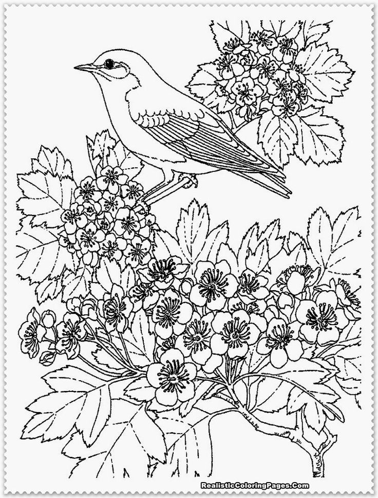 realistic bird coloring pages coloring kids coloring pages