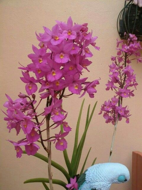 30 Best Images About Garden Orchids On Pinterest