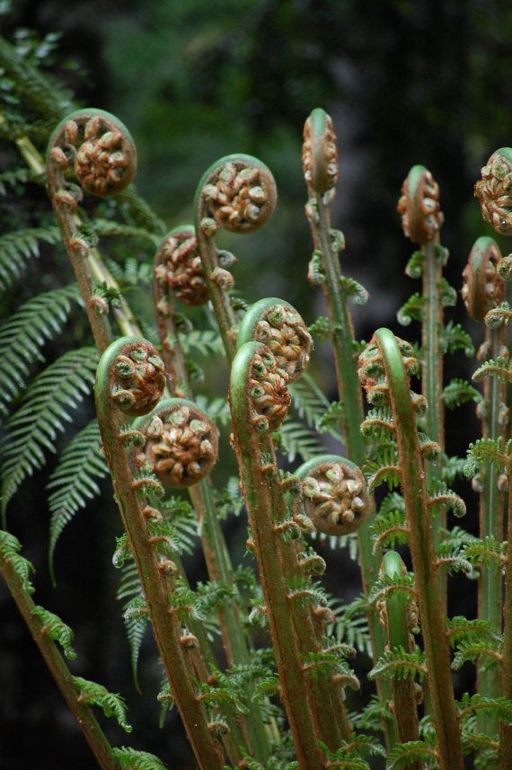 Tree Fern Frond Rainforest Photography by JenWatsonPhotography, $14.00