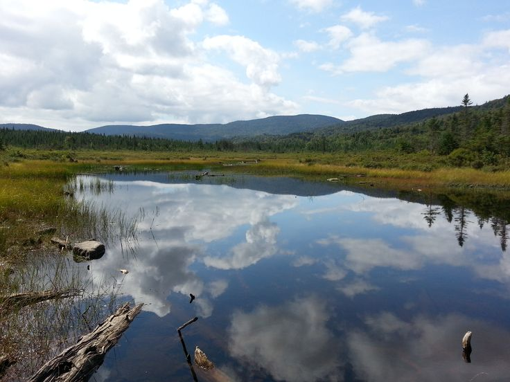 26 best images about ponds of pittsburg new hampshire on for Best trout fishing in new hampshire