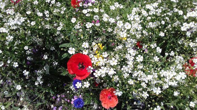 Mondások:  Kert csúcsformában - A jó idő és az iskolaszünet kihozta a kertből a legjobbat… színek-fények káprázata mindenütt. (Németh György)