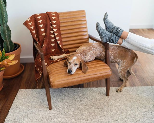 My dog might be weirder than yours  . These past few weeks I've been working closely with @roomandboard to come up with a wonderful layout of furniture for my home on a little sponsored collab. If you don't know their stuff it's amazingggg and the majority is made in the USA by craftsman. It just feels good. Anyhow I get to give away one of these Callan Chairs to y'all! We can be chair twinziesz. . How to win? Bring me some banana pudding. Just kidding  To win post a new photo of where yo...
