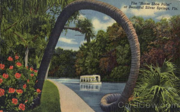 The Horse Shoe Palm Silver Springs Florida.  My parents have a picture of me on this at about 7 years old