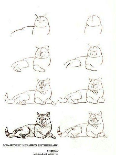 Katze Bleistiftzeichnung Pinterest Why6947 Bleistiftzeichnungenblumen Bleistiftzeichnungenlernen Ble Cat Drawing Tutorial Animal Drawings Cat Sketch