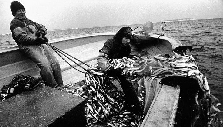 Fiskare på Nagu Berghamn, 1983 Foto: Caj Bremer