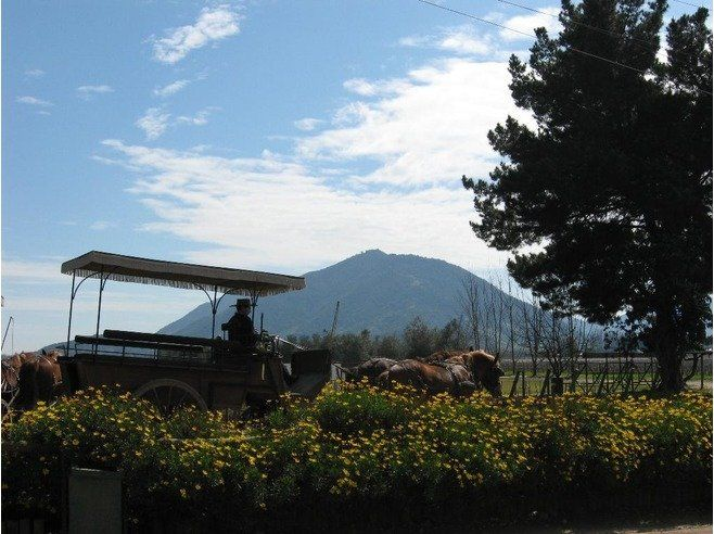 Viu Manent Winery- reached by bus. Viu Manent, a family-owned winery located near Santa Cruz, in the famous Colchagua Valley. 1 hr winery tour (US$20) includes horse-drawn carriage ride through the vineyards, an in-depth tour of the winery & cellar  The winery also featured a wine store and a craft shop, and a great restaurant