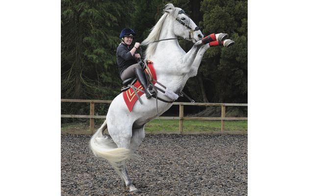 If you're looking for a new challenge for 2015, follow in Hannah's footsteps by trying your hand at stunt riding. Take a look at her top tips before you go to get the most out of your lesson at http://www.horseandhound.co.uk/features/stunt-riding-tips/#dzDbgKtkykQkrmk7.99