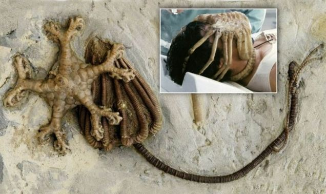 Ancient fossils that inspired alien killer in SCI-fi film classic spooky Ridley Scott, Alien has been stolen from Swiss muzium.