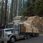 Mt Gambier Sawmill pine timber direct from sawmillers - Whiteheads Timber Sales